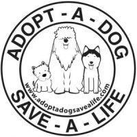 Adopt A Dog Save A Life
