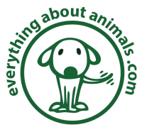 Everything About Animals