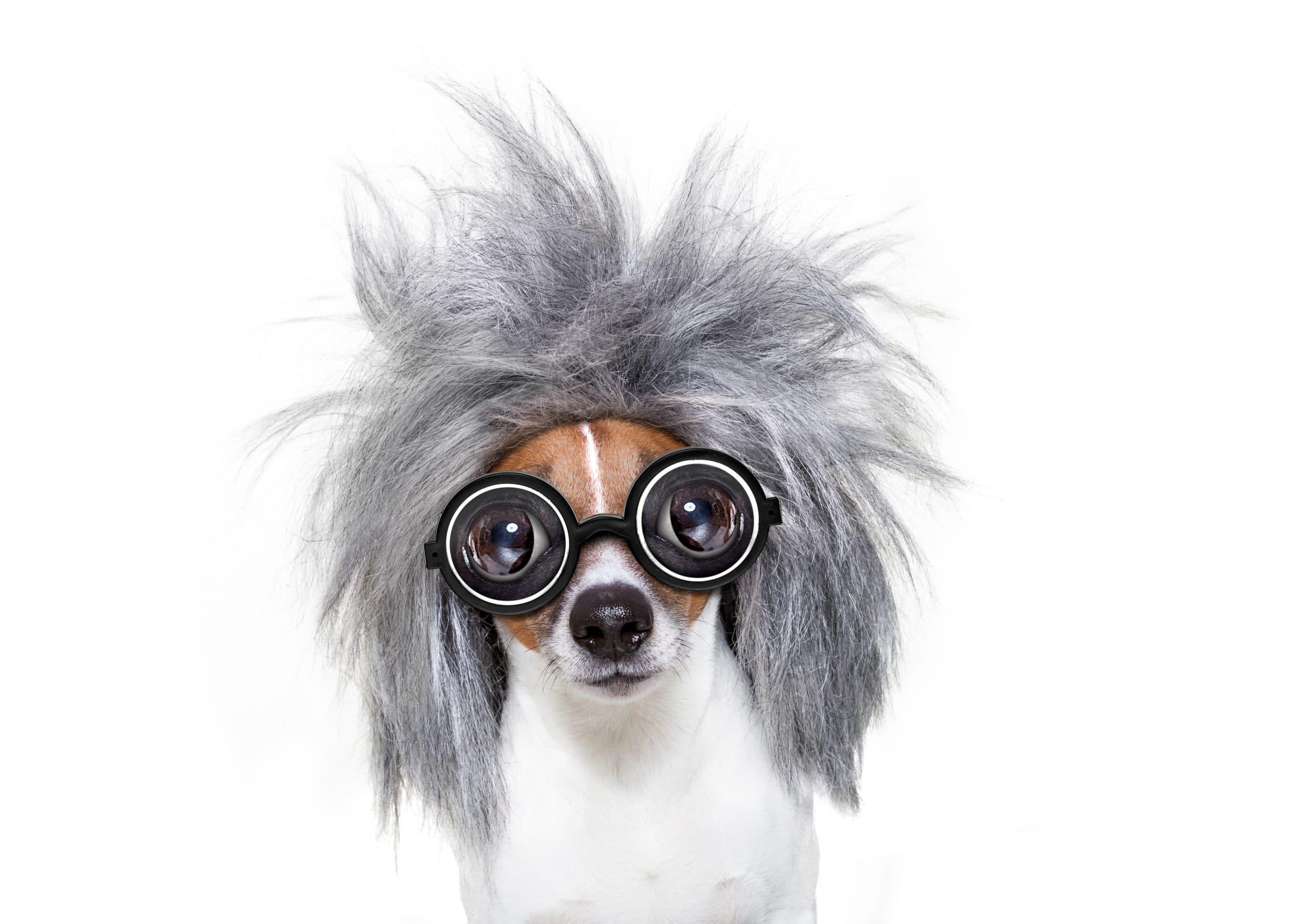 intelligent smart dog with an idea